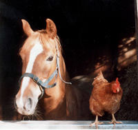 anna-the-horse-polly-the-chicken