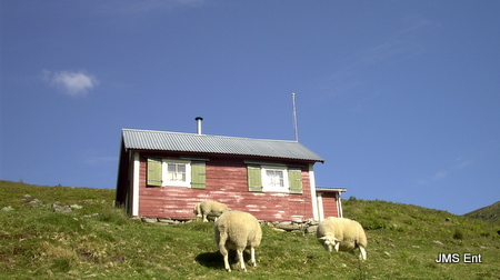 hytte sheep tokleskaret