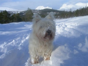 white-dog-in-snow