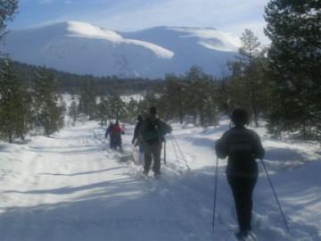 norwegian-skiers