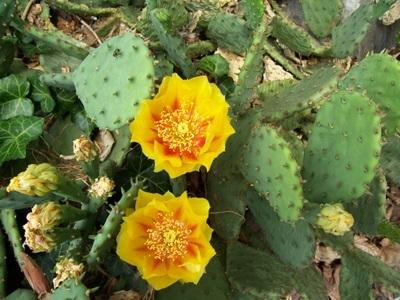 my-cactus-garden